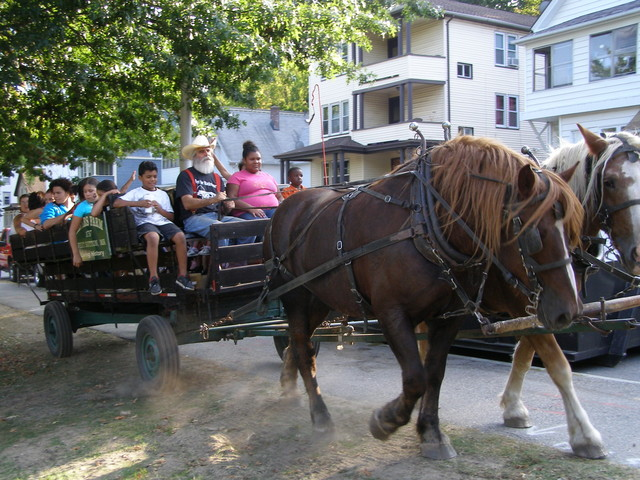 horse-carriage-rides-around-the-park